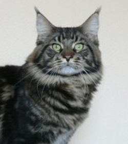 Unser Kater Wildwillow´s Funky Cold Medina