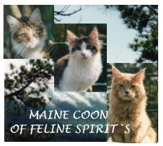 http://mainecoon-of-felinespirits.de/